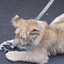 В Харьковском зоопарке появился новый хищник (ФОТО)