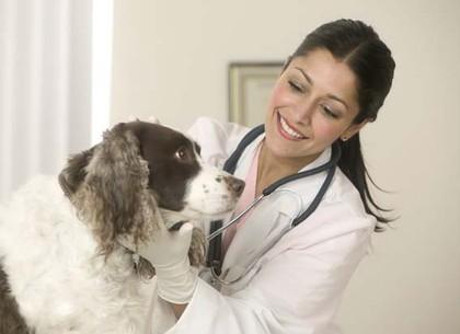В Харькове будут бесплатно стерилизовать домашних кошек и собак