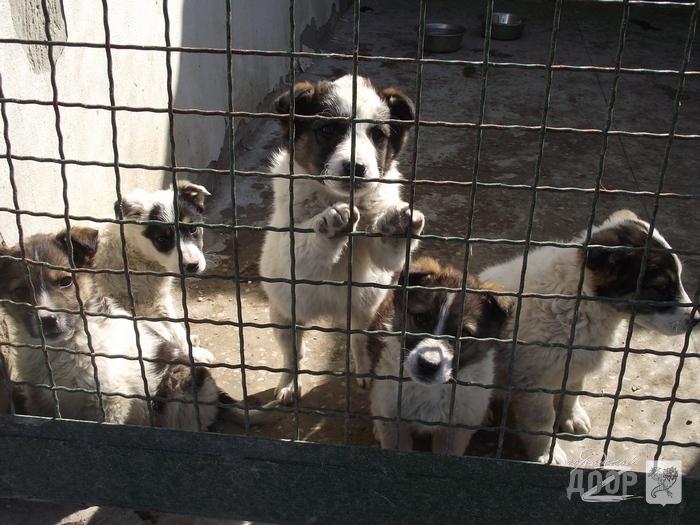 организации по ловле собак