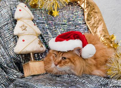 В Новый год – новый пес и кот: забрать животное из приюта можно практически даром (ФОТО)