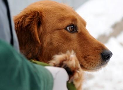 Сотни питомцев приюта для животных нашли новые семьи