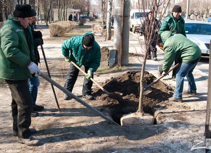 В Харькове уже высадили полтысячи лип и ясеней
