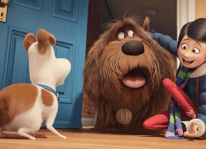 «Тайная жизнь домашних животных» в Харькове: посмотрел мультфильм – обрел питомца