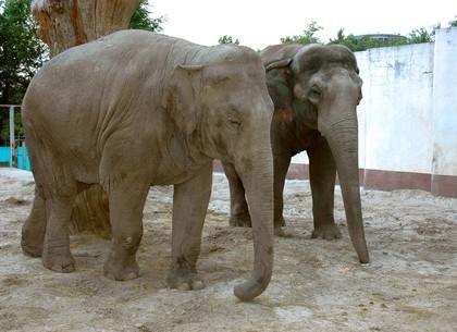 В Харьковском зоопарке подарили на день рождения слону торт (ВИДЕО)