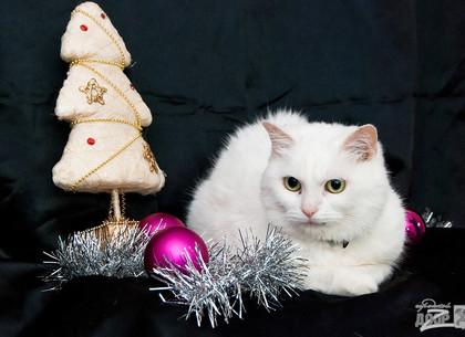 «В Новый год – новый кот и новый пес»: приют для животных проводит акцию