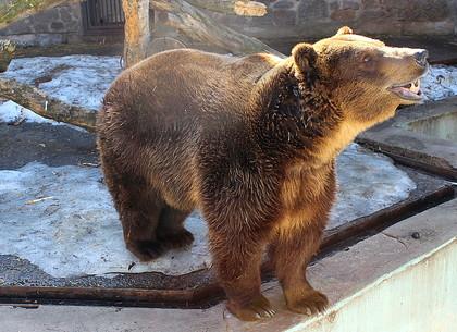 В харьковском зоопарке из зимней спячки выходят бурые медведи (ВИДЕО)