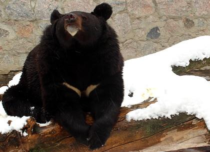 Как встретили апрельскую зиму обитатели зоопарка (ФОТО)