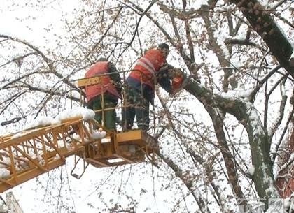 700 деревьев и более 2 тысяч упавших больших веток: Коммунальщики устраняют последствия непогоды