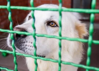За последний месяц в харьковском приюте нашли дом для 50 животных