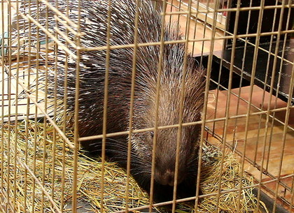 Животные из Харьковского зоопарка побывали в гостях у детей (ФОТО, ВИДЕО)