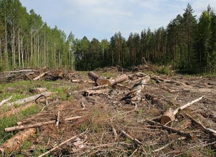 В лесхозах Харьковщины аудит выявил потерь на 1,5 млн. гривен