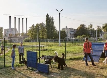В городе установили более 30 площадок для выгула собак