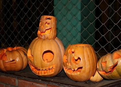 У животных Харьковского зоопарка – вкусный Хэллоуин (ФОТО)