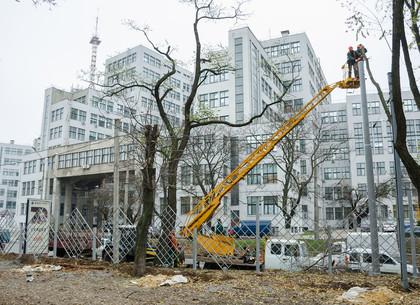 В Харькове в осенне-зимний период планируют привести в порядок 500 «сложных» деревьев