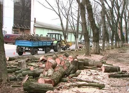 В Киевском районе убирают аварийные деревья