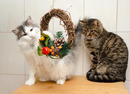В харьковском городском приюте для животных новогодняя акция