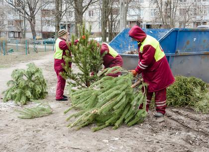 Коммунальщики просят харьковчан не сорить елками