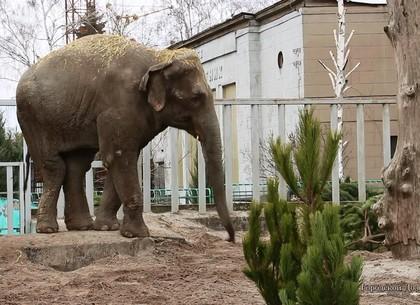 Зима в Харьковском зоопарке