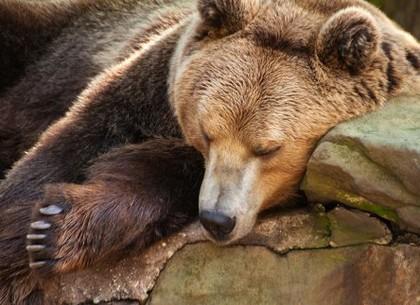 В Харьковском зоопарке медведи готовятся впасть в спячку