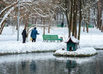 Зимний Саржин яр