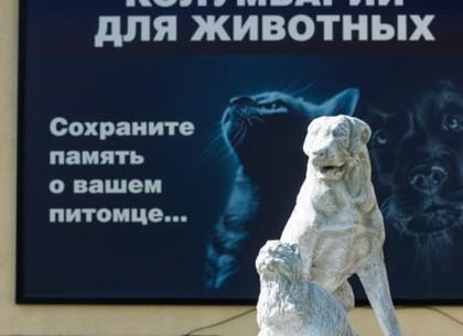 Ритуальными услугами для животных в Харькове воспользовались более 100 хозяев