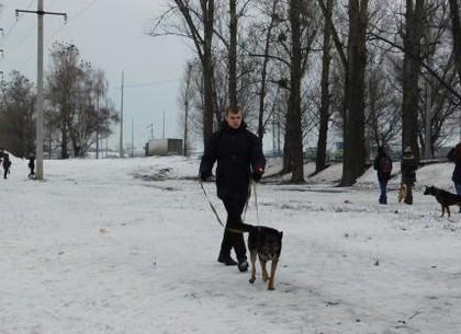 В Харькове устроят массовый забег людей с собаками