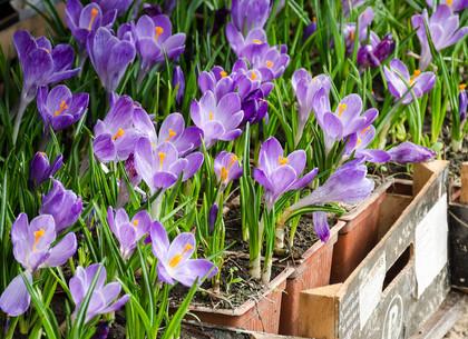 Около 2 000 000 цветов в этом году планируют высадить на харьковские клумбы