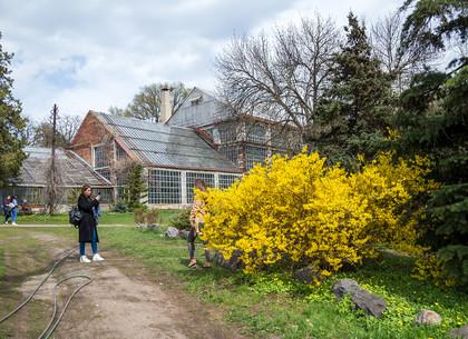 Весна в ботаническом саду на Клочковской