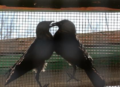 Харьковчане могут принести травмированных животных в зоопарк