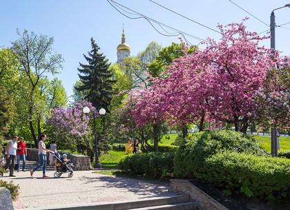 Цветущий Харьков (ФОТО)