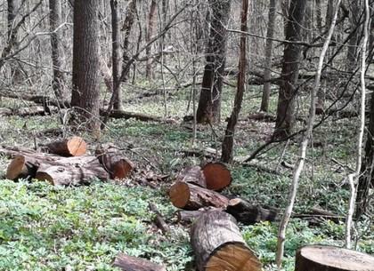 Лесорубу, уничтожавшему деревья в ландшафтном парке «Сокольники – Померки» объявлено подозрение