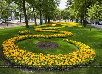 В Харькове заканчивается сезон посадки цветов (ФОТО)
