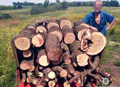 Под Харьковом задержали «черного» лесоруба