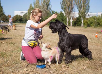 В Харькове прошла акция, посвященная Всемирному дню бездомных животных
