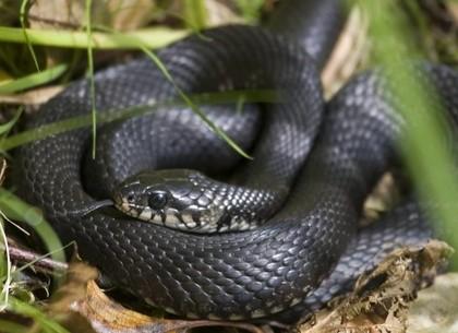 Аномальная жара сместила биологические часы змей и пресмыкающихся