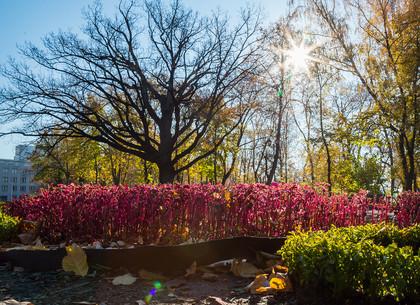 Утро в саду Шевченко (ФОТО)