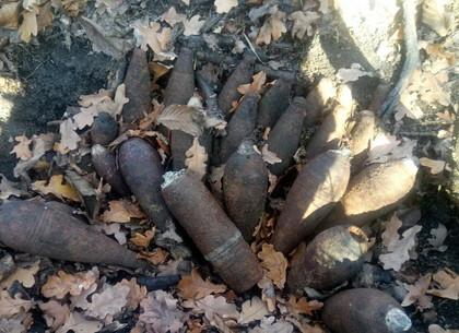 Взрывоопасные «грибы» собрали спасатели в лесу под Шестаково