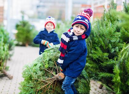 Стало известно, сколько будет стоить натуральная елка и сосна в этом году