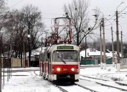 Движению трамвая №3 в среду помешает аварийное дерево