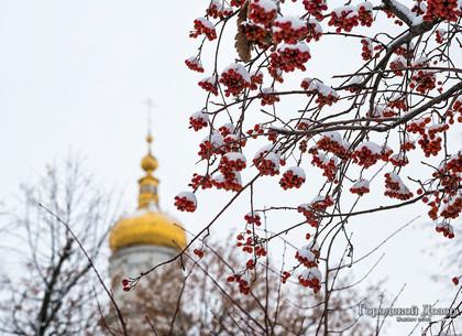 Прогноз погоды в Харькове на вторник, 8 января