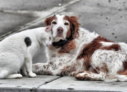 За оставление животных на произвол судьбы грозит тюрьма