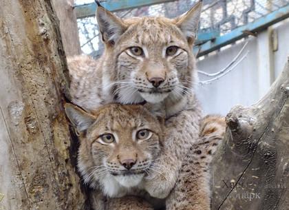 Международный День объятий в харьковском зоопарке (ФОТО)