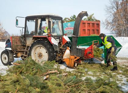 С каждым годом все больше харьковчан отказываются от живых елок (ФОТО)