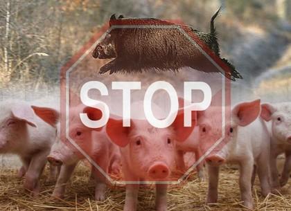 На выезде из Харькова обнаружены туши свиней с АЧС