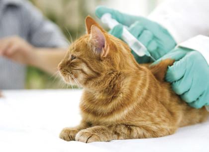 В Харькове пройдет вакцинация домашних животных от бешенства