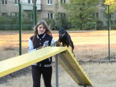 Новые площадки для выгула собак построят в Харькове в этом году