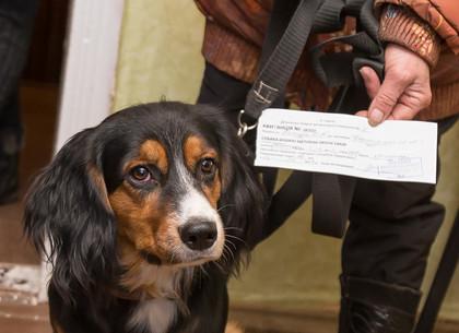 Как проходит бесплатная вакцинация домашних животных от бешенства в Харькове