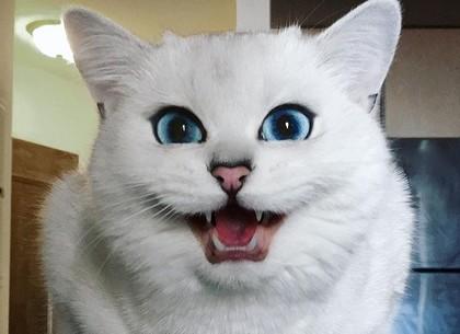 Бешеный кот: в части Холодногорского района введен карантин
