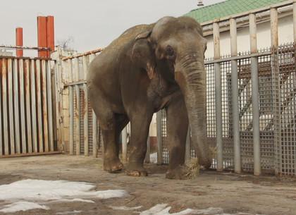 Слоны Харьковского зоопарка вышли на пикник (ВИДЕО, ФОТО)