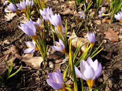 В Харьковский ботанический сад пришла весна (ВИДЕО)